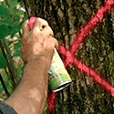 Forestry paints